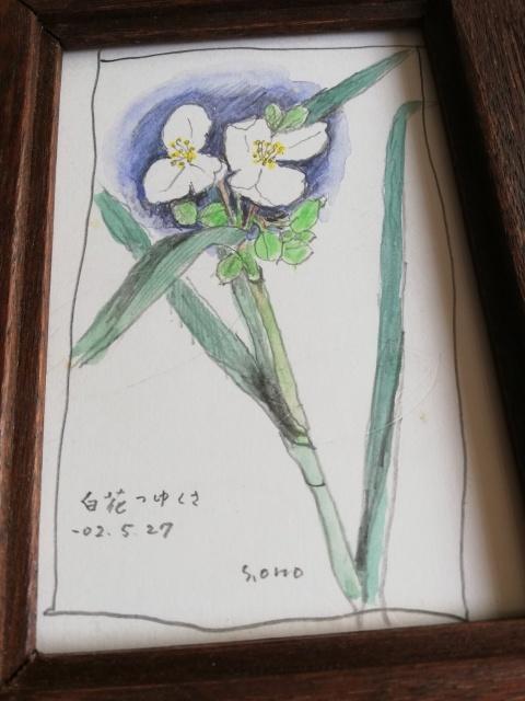 白花つゆくさ ̄小野セツローさん_b0207631_10402580.jpg
