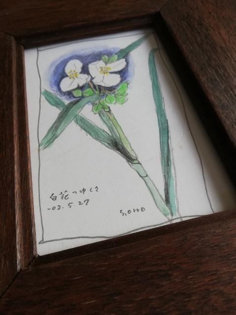 白花つゆくさ ̄小野セツローさん_b0207631_10404667.jpg