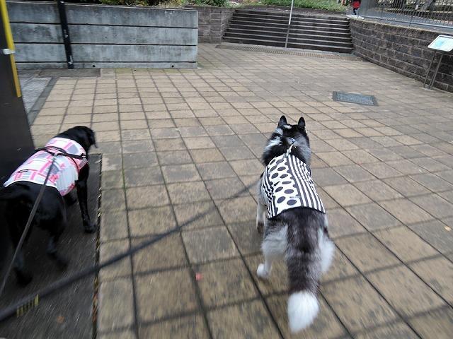 散歩屋日誌【31】_c0062832_15530419.jpg