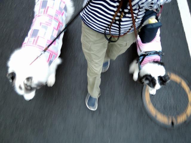 散歩屋日誌【31】_c0062832_15530575.jpg