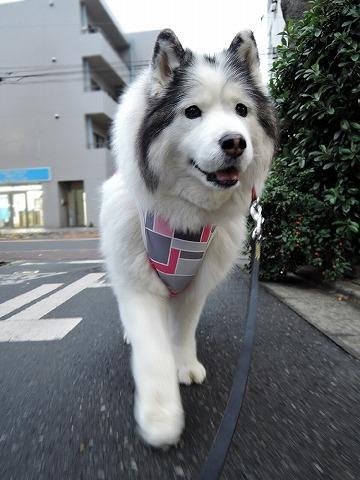 散歩屋日誌【31】_c0062832_15530587.jpg