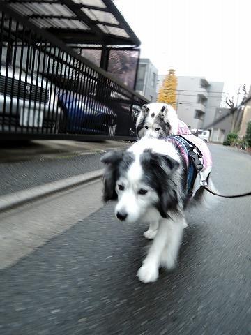 散歩屋日誌【31】_c0062832_15530593.jpg