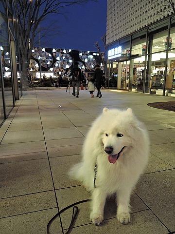 散歩屋日誌【31】_c0062832_15543332.jpg