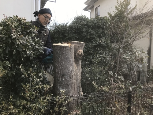 植木伐採_f0031037_11501262.jpeg