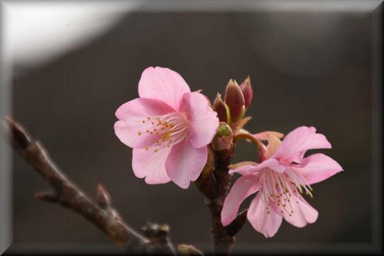 もう一つの小さな春 @1月12日_f0363141_09173727.jpg