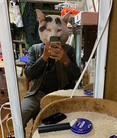 うちの猫ら写真展2020_a0028451_12474365.jpg