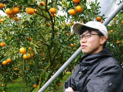 究極の柑橘「せとか」 令和2年も出荷は2月中旬より!収穫まで1ヶ月前の様子を現地取材(後編)_a0254656_16372237.jpg