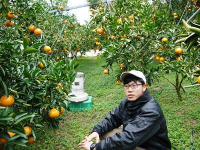 究極の柑橘「せとか」 令和2年も出荷は2月中旬より!収穫まで1ヶ月前の様子を現地取材(後編)_a0254656_17190237.jpg