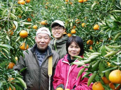 究極の柑橘「せとか」 令和2年も出荷は2月中旬より!収穫まで1ヶ月前の様子を現地取材(後編)_a0254656_17282447.jpg
