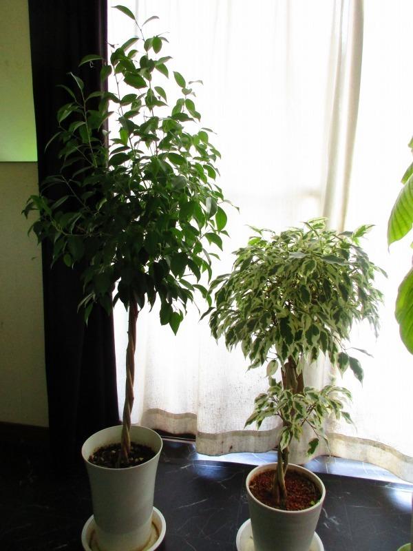 植物「癒しを求めて」_b0362459_15053465.jpg