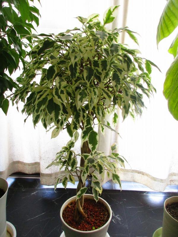 植物「癒しを求めて」_b0362459_15072832.jpg