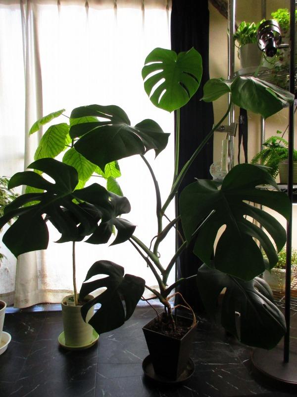植物「癒しを求めて」_b0362459_15093831.jpg