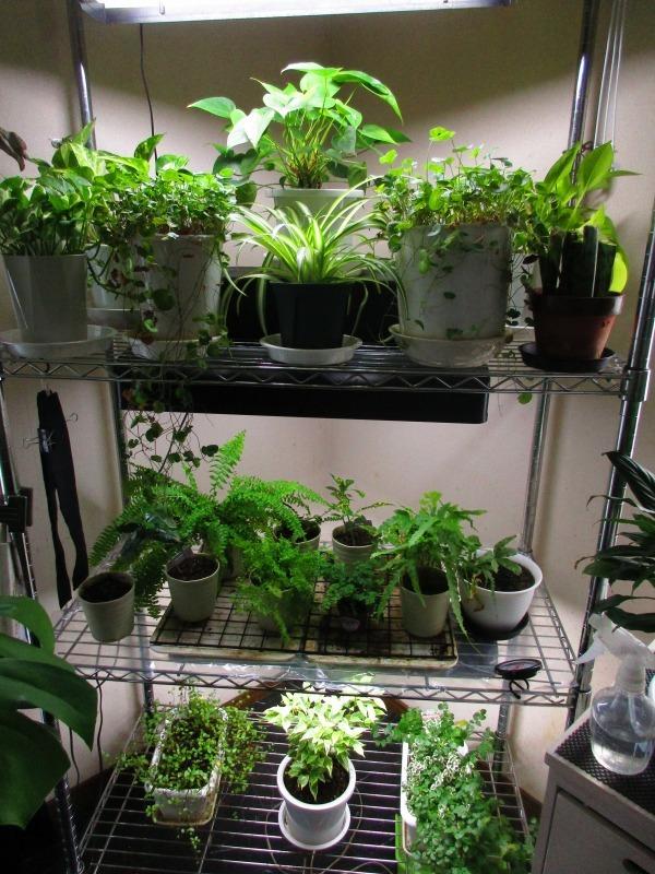 植物「癒しを求めて」_b0362459_15115793.jpg