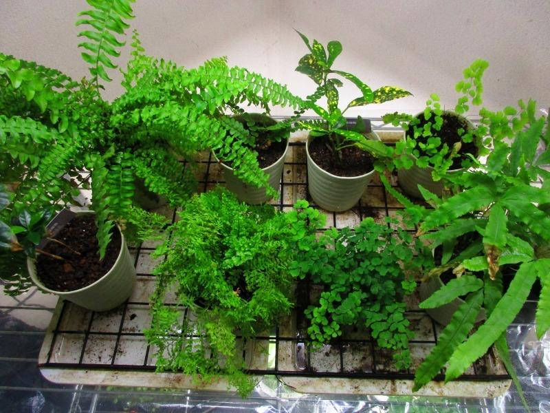 植物「癒しを求めて」_b0362459_15145263.jpg