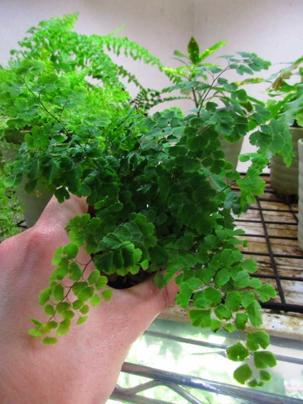 植物「癒しを求めて」_b0362459_15161141.jpg