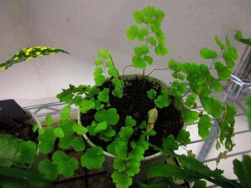植物「癒しを求めて」_b0362459_15190473.jpg