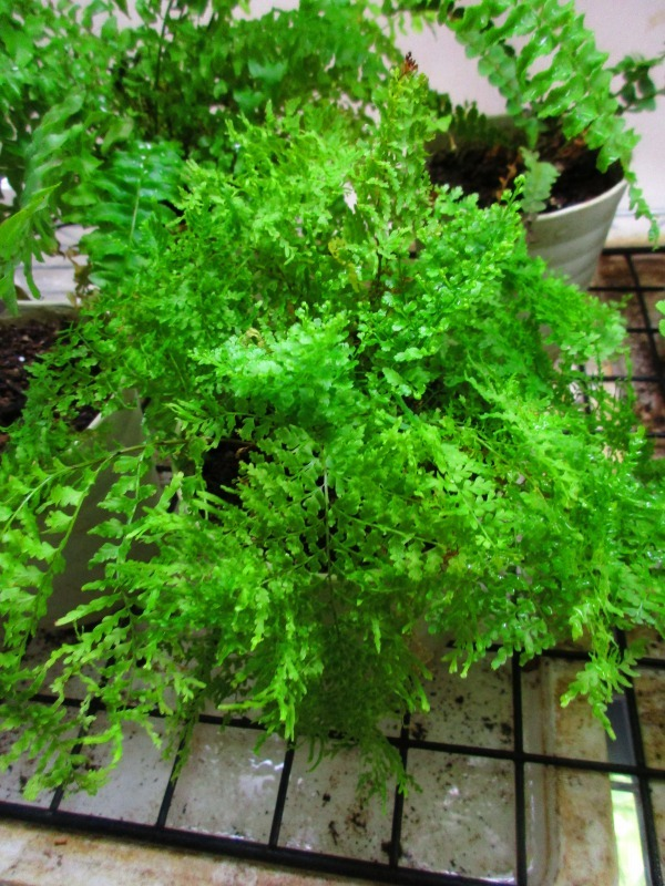 植物「癒しを求めて」_b0362459_15211018.jpg
