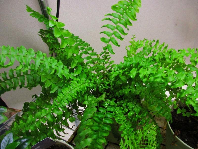 植物「癒しを求めて」_b0362459_15223934.jpg