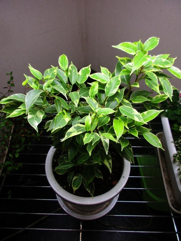 植物「癒しを求めて」_b0362459_15243087.jpg