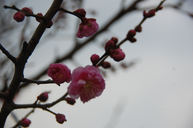 我が家の花壇の一区画整備_c0108460_17173408.jpg