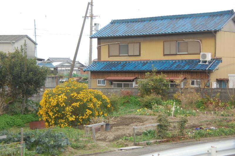 我が家の花壇の一区画整備_c0108460_17191091.jpg