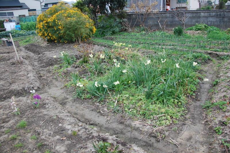 我が家の花壇の一区画整備_c0108460_17191129.jpg
