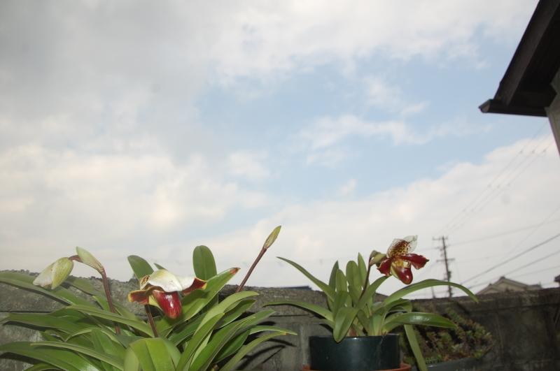 我が家の花壇の一区画整備_c0108460_17225148.jpg