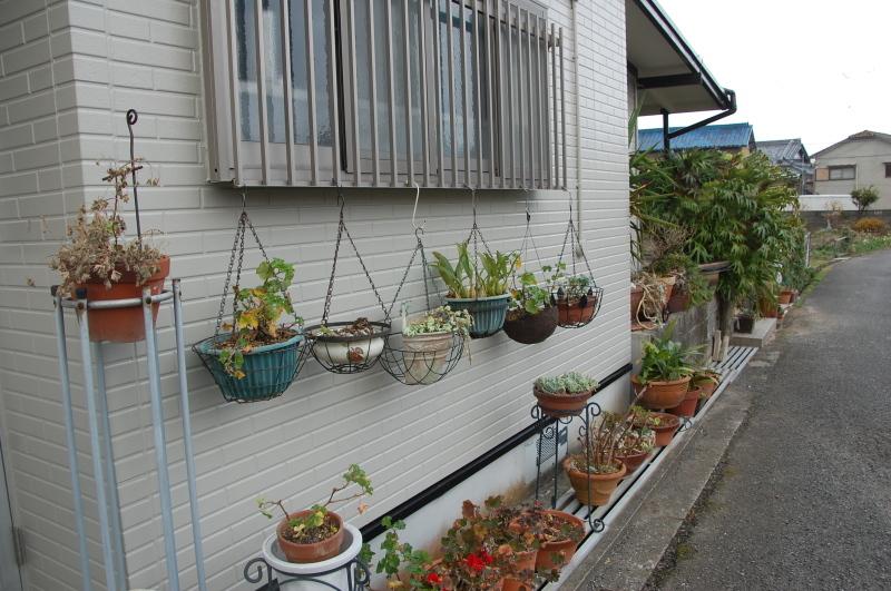 我が家の花壇の一区画整備_c0108460_17225250.jpg