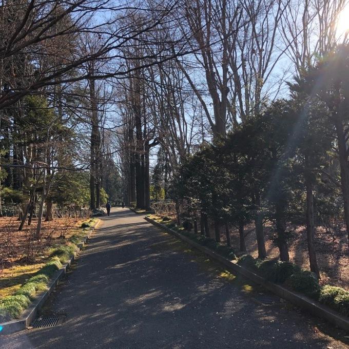 野鳥観察会(宇都宮 中央公園)_d0334060_17491386.jpg