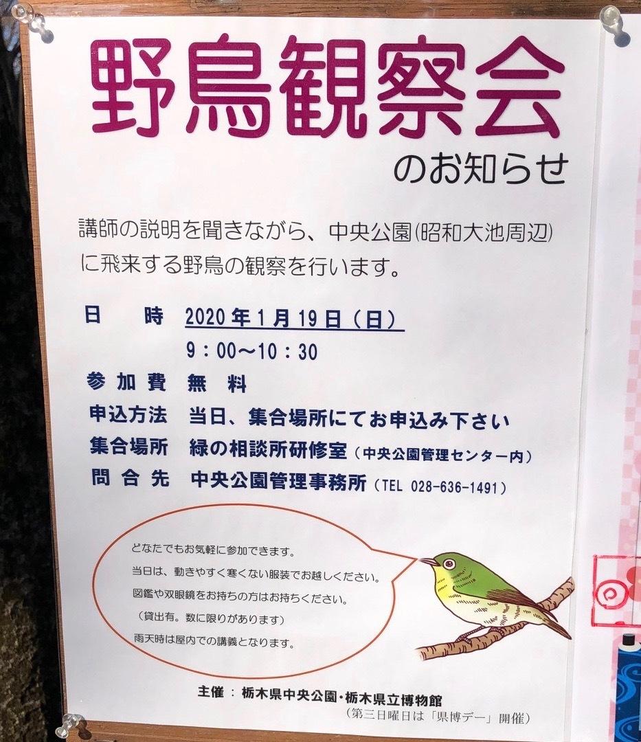 野鳥観察会(宇都宮 中央公園)_d0334060_17491416.jpeg
