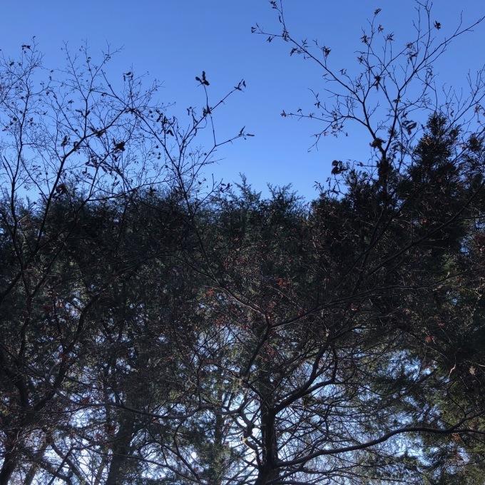 野鳥観察会(宇都宮 中央公園)_d0334060_17491521.jpeg