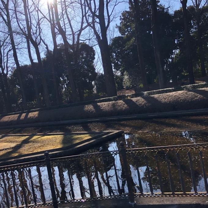 野鳥観察会(宇都宮 中央公園)_d0334060_17491526.jpg