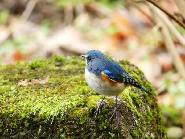 冬の鳥たち_a0351368_00043298.jpg