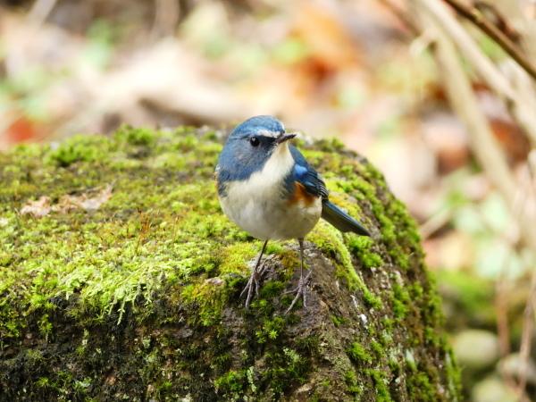 冬の鳥たち_a0351368_00043398.jpg