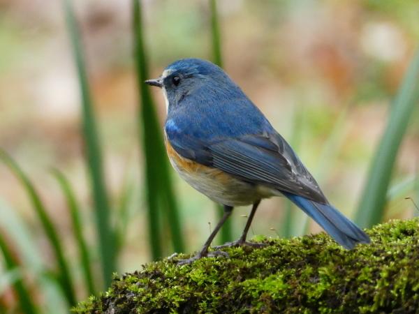 冬の鳥たち_a0351368_00043437.jpg