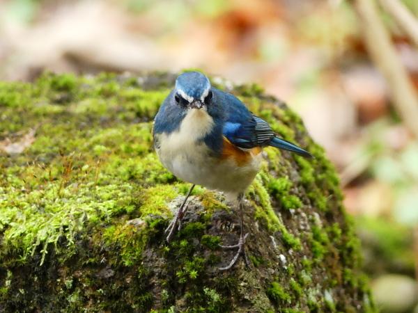 冬の鳥たち_a0351368_00043580.jpg
