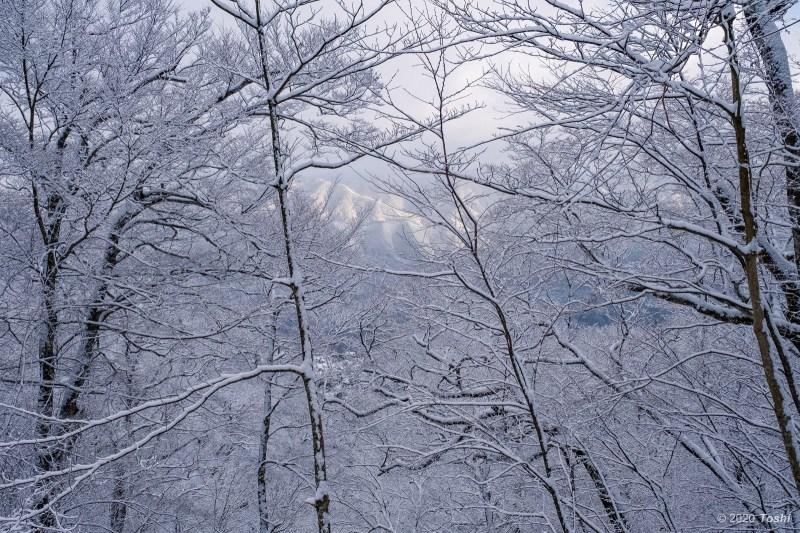 野迫川 樹氷_c0350572_21151152.jpg