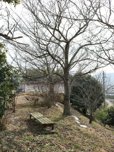一月の裏山散策…その1_c0334574_19390200.jpg