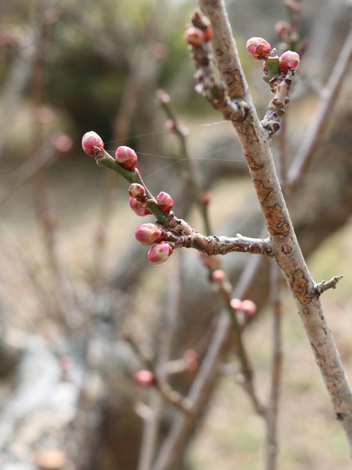 一月の裏山散策…その1_c0334574_19402002.jpg