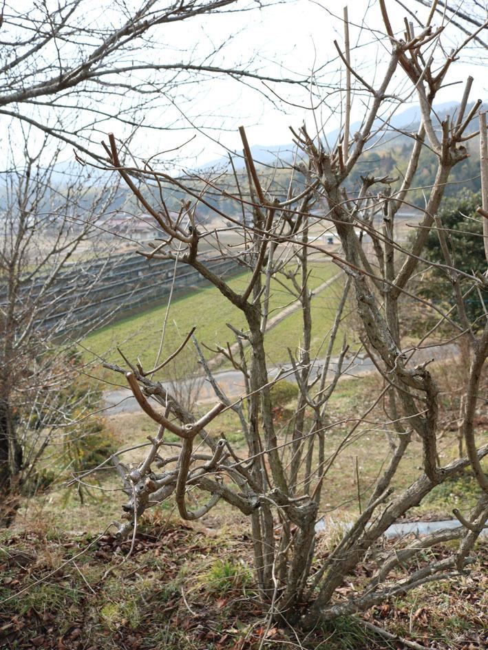 一月の裏山散策…その1_c0334574_19435308.jpg