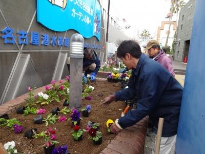 ガーデンふ頭総合案内所前花壇の植替えR2.1.17_d0338682_09205344.jpg
