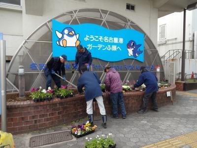 ガーデンふ頭総合案内所前花壇の植替えR2.1.17_d0338682_09223632.jpg