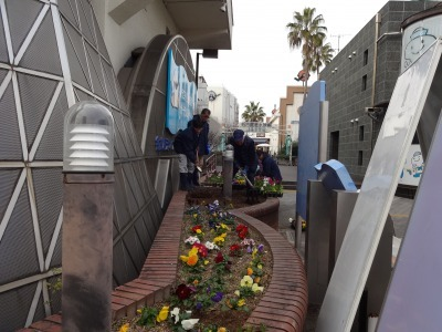 ガーデンふ頭総合案内所前花壇の植替えR2.1.17_d0338682_09230203.jpg