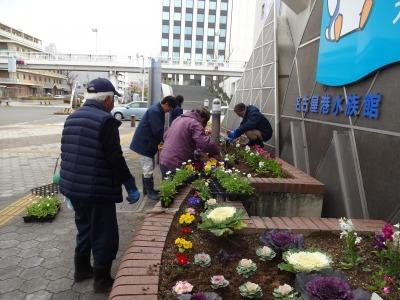 ガーデンふ頭総合案内所前花壇の植替えR2.1.17_d0338682_09232396.jpg
