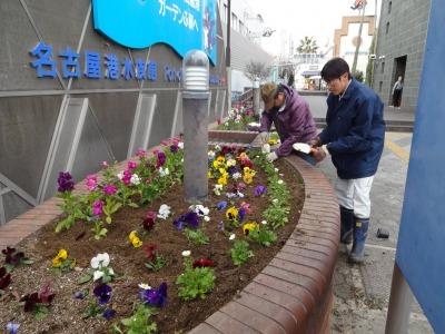 ガーデンふ頭総合案内所前花壇の植替えR2.1.17_d0338682_09233582.jpg