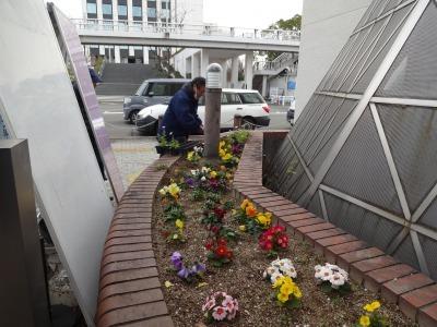 ガーデンふ頭総合案内所前花壇の植替えR2.1.17_d0338682_09234539.jpg