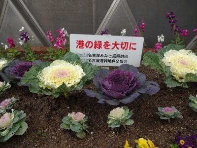 ガーデンふ頭総合案内所前花壇の植替えR2.1.17_d0338682_09240397.jpg