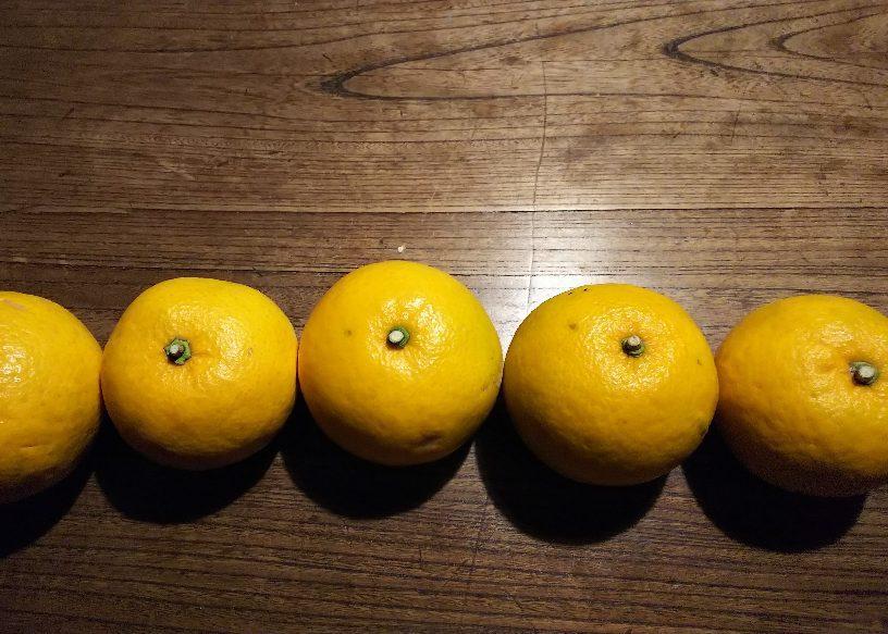 柑橘祭り_e0303187_09204288.jpg
