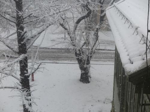 重文本館からの雪景色 2020.1.21 午前_c0075701_14081921.jpg