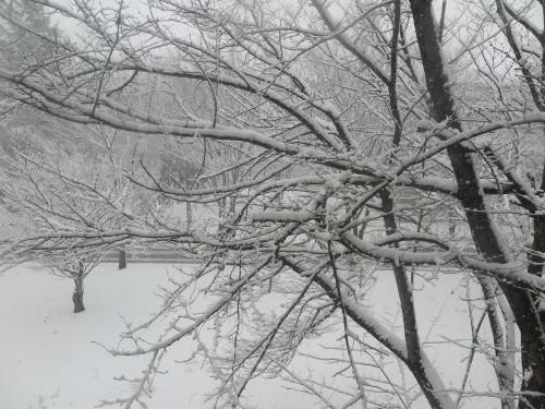 重文本館からの雪景色 2020.1.21 午前_c0075701_14082460.jpg
